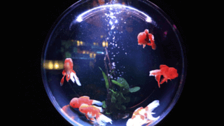 what is the best goldfish bowl keyword research